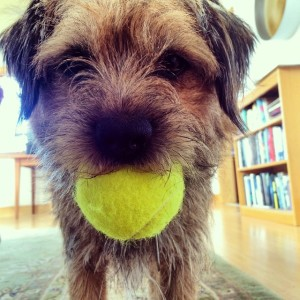 We almost missed #NationalPuppyDay! #borderterrier #sometimesofficedog #artistresidency