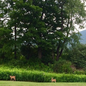 Oh 2 little spotted fawns! Bambi artistresidency residency nohunting