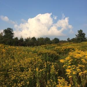 Right now The latesummer palette endofsummer goldenrod residency artistresidency artscolonyhellip