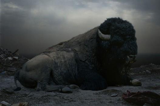 johan-untitled153-buffalo-527x350