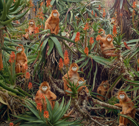 SimenJohan_Red-Monkeys1